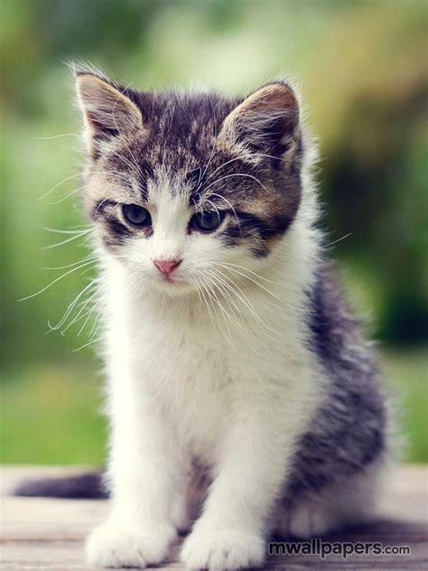cute kitten wallpaper hd  cat kitty kitten cats