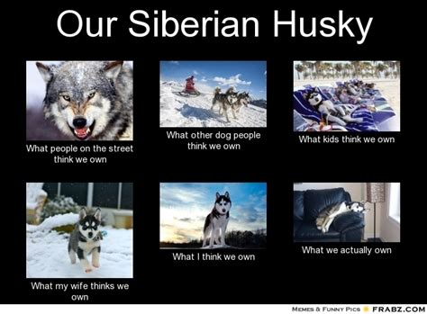 Siberian Husky Meme - evil husky meme generator image memes at relatably com