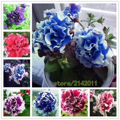 642 best bonsai images on gardening beautiful gardens and bonsai seeds