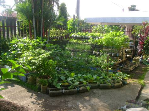 recycled containers for gardening combating hunger and malnutrition with bottles and pots