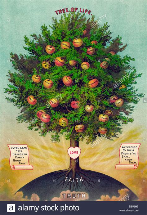 tree  life  fruits labelled   virtues