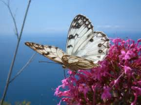 le mit foto foto farfalle fotografie di farfalle