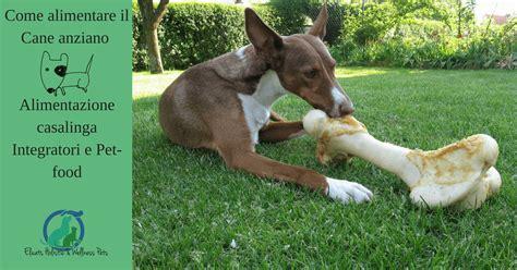 alimentazione per cani casalinga come alimentare il anziano alimentazione casalinga