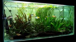 So, how exactly do large fish tanks make aquarium care simple?