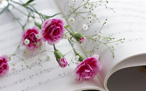 Rosafarbene Blumen und Musik wallpaper   AllWallpaper.in