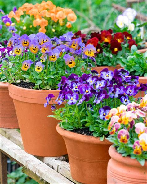 Best Place To Buy Flower Pots Potted Plants Bankwhitt Academy
