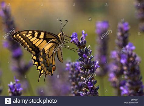 Drohne Fliegen Englischer Garten München by Nectar Stockfotos Nectar Bilder Alamy