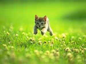 cute-<strong>kitten</strong>-631-4.jpg