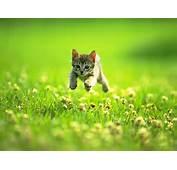Free Picture &gt Animal Cute Kitten