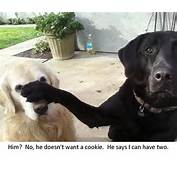 He Doesnt Want Cookie I Can Have Two Funny Dog Photo With Captions
