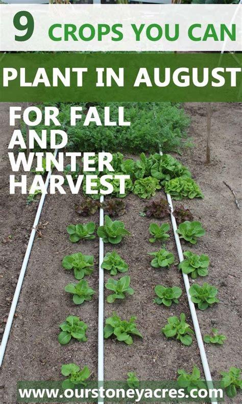 Best 25 Winter Crops Ideas On Pinterest Winter What To Grow In Winter Vegetable Garden