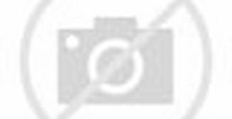 Contoh Desain Rumah Idaman Mewah Minimalis 1 Lantai Keluarga Masa Kini ...