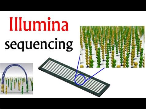 illumina gene sequencing illumina sequencing dna sequencing by synthesis