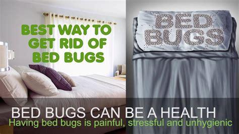 rid  bed bugs tips  bed bug treatment london uk exterminators pest