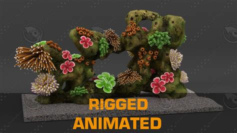 coral reef rigged  model