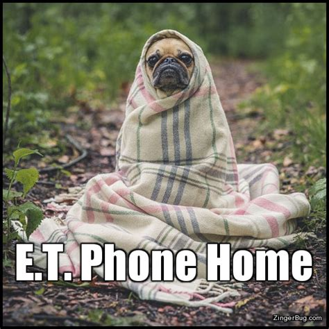 Et Phone Home Meme - dog in blanket meme www pixshark com images galleries