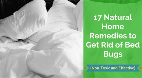 natural home remedies   rid  bed bugs  toxic  effective