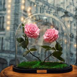 forever roses real enchanted rose lasts 3 years without water or sunlight