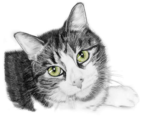 Cat Pencil 10 best images about draw cat eyey on drawing step for and cat sketch