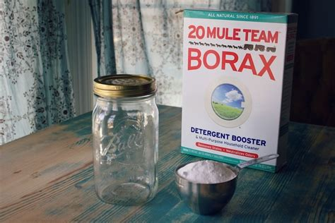 borax upholstery cleaner how to get rid of fleas on dogs hirerush blog