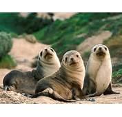 Download Wallpaper Best GupSup Free Wildlife Animal Desktop
