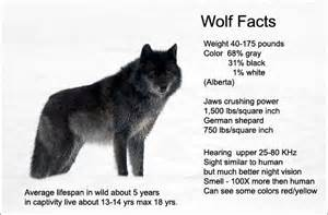 Pics photos wolves facts