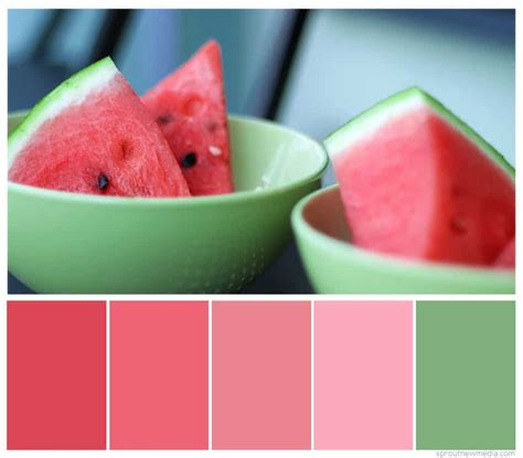 what color is watermelon watermelon colors sprout new media