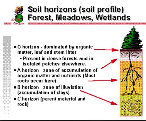 soil horizons diagram soil horizon layers diagram car interior design