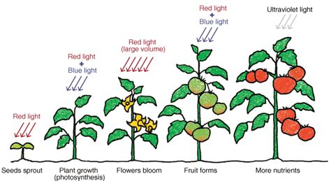 light and plant growth nurturing plants with light special contents all about