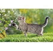 Curious Cute Kittens HD Wallpapers  Design Hey