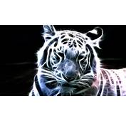 Neon White Tiger Wallpapers  HD Wallpaper