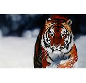 Animal Backgrounds Photos Hd Wallpapers