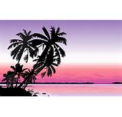Palm Tree Hd Wallpapers 10  AMB