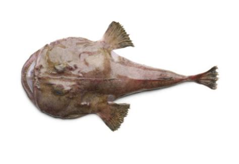 cucinare la rana pescatrice al forno rana pescatrice al cartoccio al forno ricette pesce