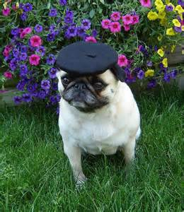 funny-<strong>pug</strong>-hat-beret.jpg