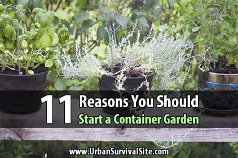 how to start a container garden 11 reasons you should start a container garden