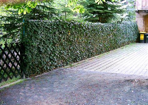 terrasse verschönern blickdicht zaun idee