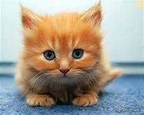 Cute Kitten Cat Orange