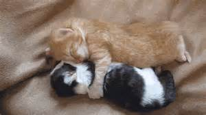 Image source http www dose ca 2013 10 07 top 10 cutest kitten gifs