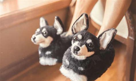 company  slippers     dog