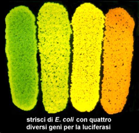 librerie genomiche le tecniche di clonaggio