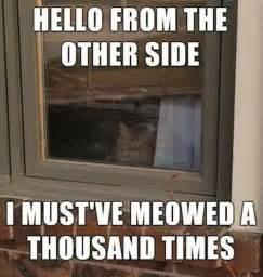 Funny Hello Meme - cats funny hello kitty adele image 4168282 by
