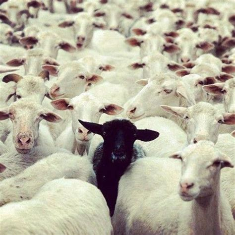 black sheep this or that 5 signs you may be the black sheep of the family