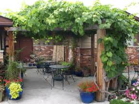 Grapevine Pergola by Pergola With Grapes Flickr Photo Sharing