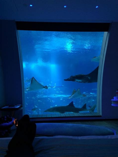 hotel room underwater underwater hotel room fish and water dwellers
