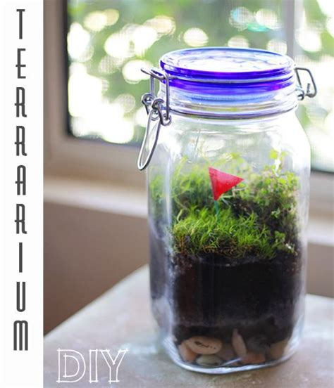 kitchen window terrarium diy self sustaining jar terrariums yes please so cute