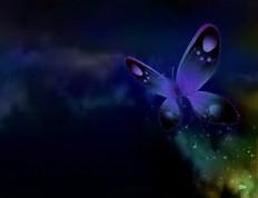 Butterfly Screensavers