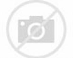 Red Hibiscus Flower Tree
