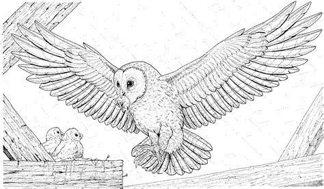 owl wings coloring page free owl coloring pages