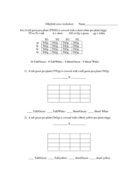 Dihybrid Cross Worksheet by 19 Best Images Of Dihybrid Worksheet With Answer Key
